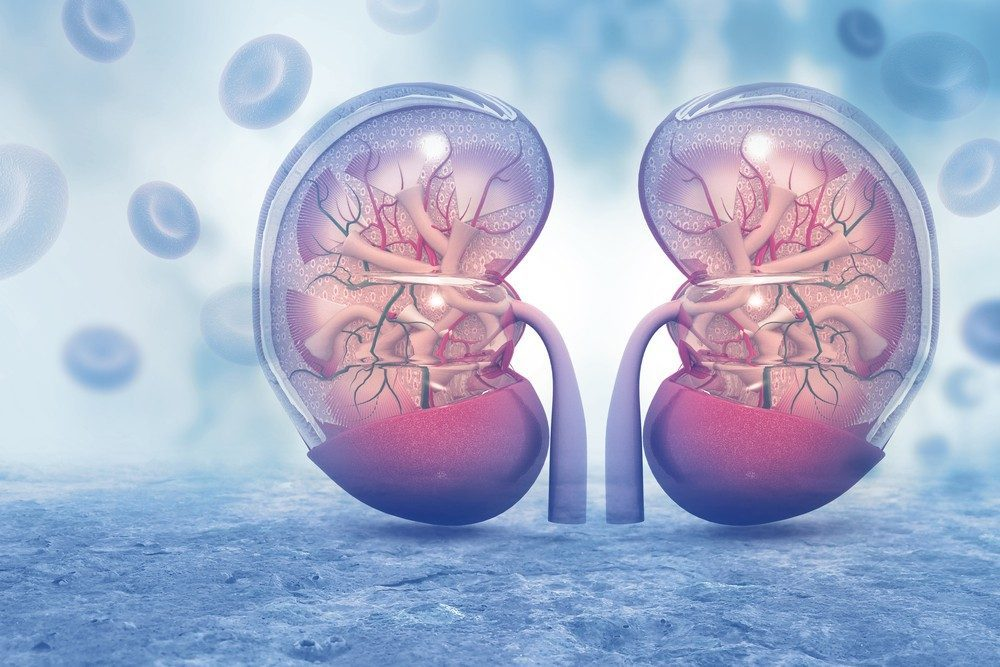 Ten Things to Know About Kidney Disease